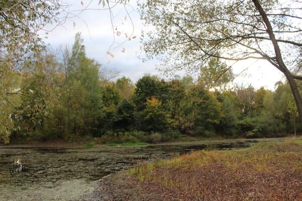 Экологические изыскания под строительство