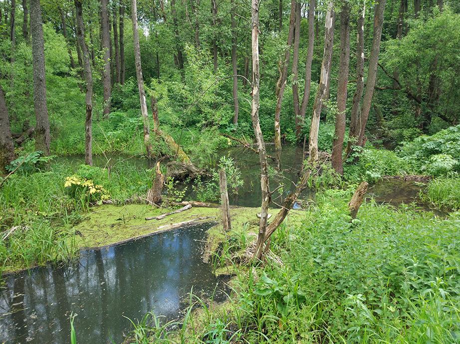 Анализ грунтовых вод